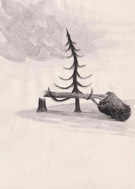 alberi 72 dpi.jpg