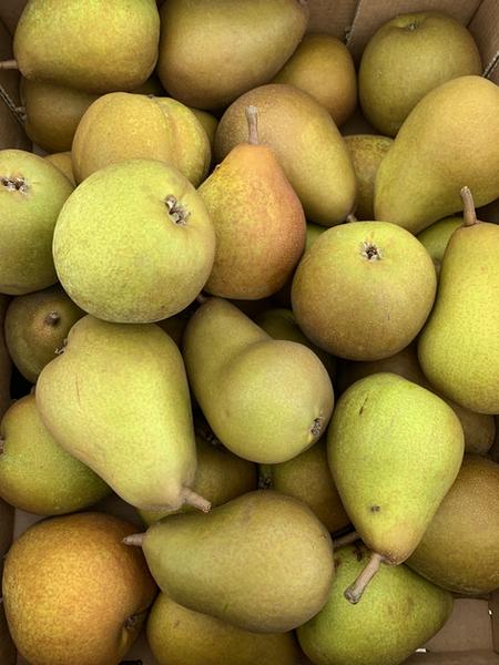 Ringden Farm Comice Pears