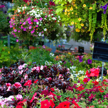Annuals in bloom