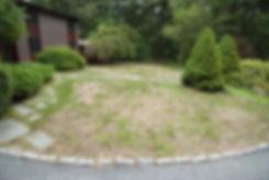 Diseased Lawn.jpg