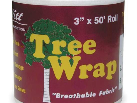 Wrap trees for the winter!