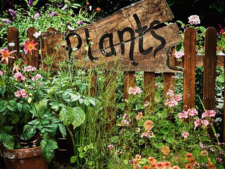 Trees, shrubs, perennials, roses and more...