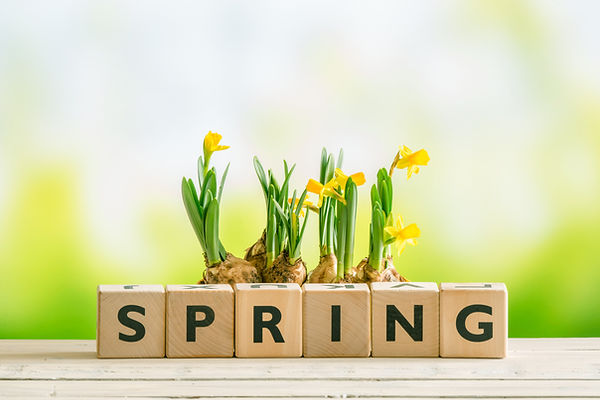 bigstock-Daffodil-Flowers-And-The-Word--