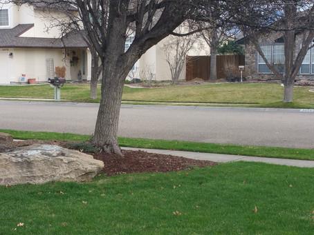 """Fertilize your lawn now using Ferti-lome """"Greenmaker fertilizer"""