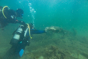 Souvenir photo of a diver with a seal in Scapa Flow