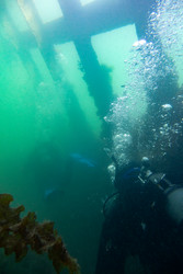 Divers learning to dive in Scapa Flow