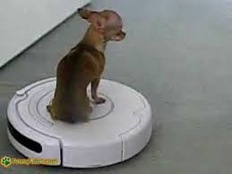 Lesson learned from a dog named Whisky riding a Roomba