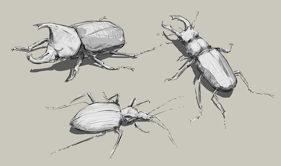 beetle1.png