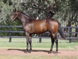 Busy Inglis Premier For TBB