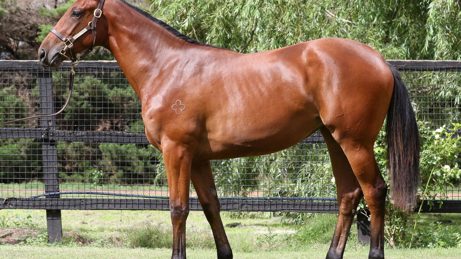 Need I Say More about this Dissident Filly?