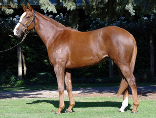 Mayford Park To Host New Filly