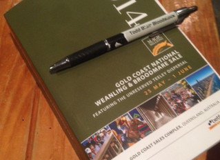 Magic Millions Weanling and Broodmare Sale