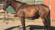 Rawoof's Filly Sells For $150k