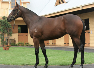 TBB Clients Purchase Share Flashy Filly