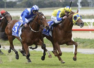 Faatinah To Run On Cup Day