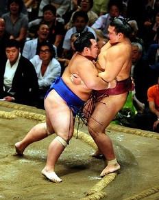 sumo TOURNOIS combat