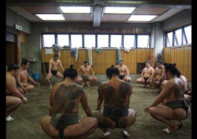 sumo, heya
