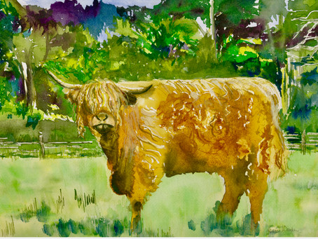 Hairy Cow!
