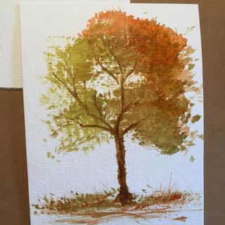 Autum Tree.jpg