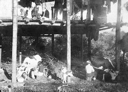 Milking the first cows under the old house.jpg