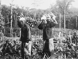 Werner and Margot Aron carrying bananas in home-made clothes