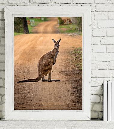 Kangaroo Framed.jpg