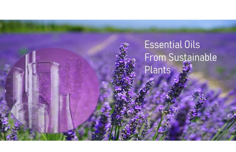 Essential%20Oils%20from%20Sustainable%20