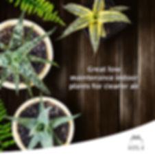 indoorplant.jpg