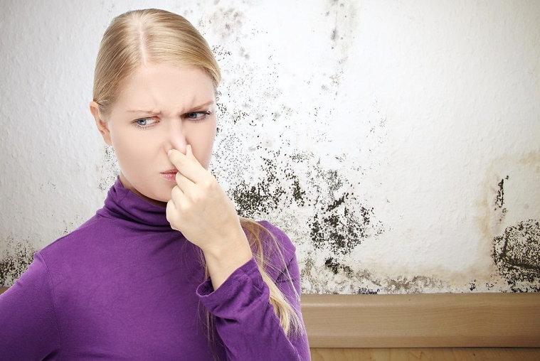 get rid of musty smell.jpg