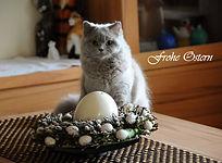 Ostern_Katze.jpg