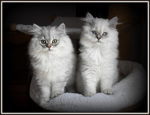 Rascal und Romeo