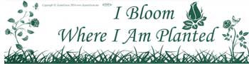 I Bloom Where I Am Planted bumper sticker
