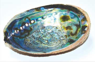 "6"" Abalone Shell incense burner (B quality)"
