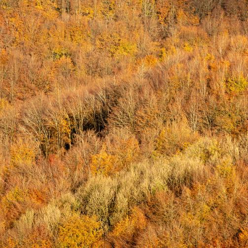 Melbury Wood (3): Following Morning