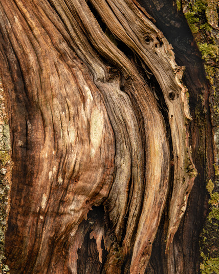 Lost Tree Bark