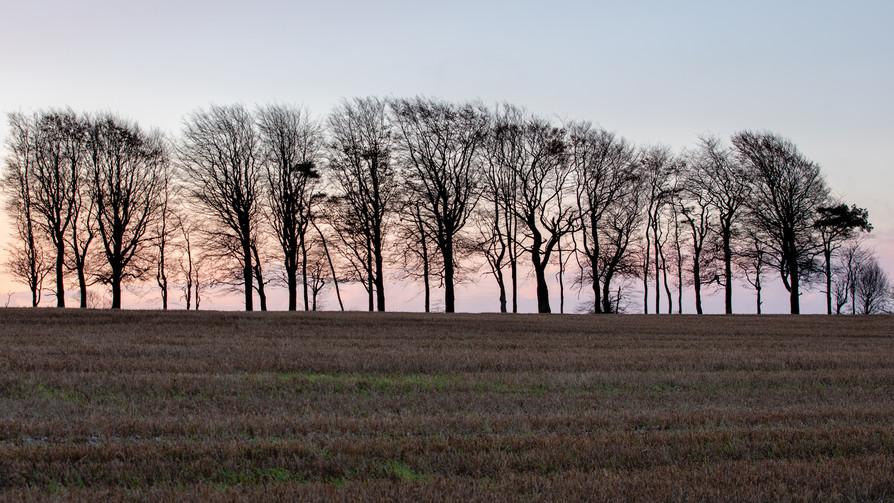 Dawn On Ashbury Down