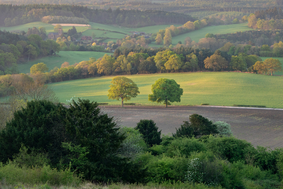 Dawn On The North Downs