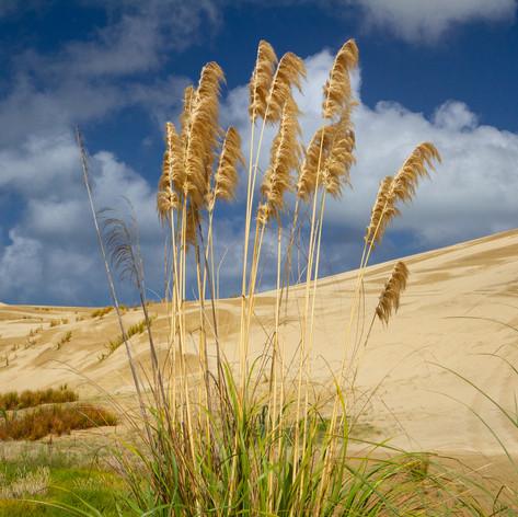 Flowering In The Dunes