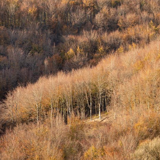 Melbury Wood (1): Late Afternoon