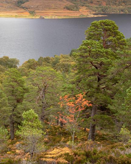 Autumn Across Loch Maree