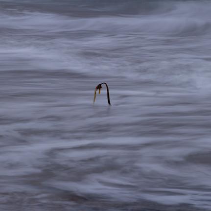 Struggling In The Tide