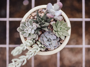 The Complete Care Guide to Keeping Your Succulents Healthy