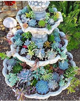 succulentgarden.jpg