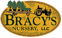 bracys.png