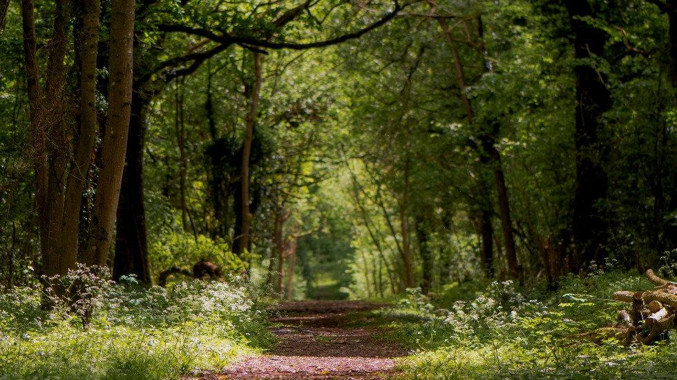 Image of Woodland.jpg