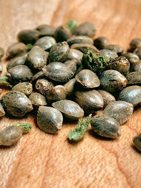 seeds_edited_edited.jpg