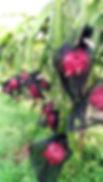 IMG_7415_edited.jpg