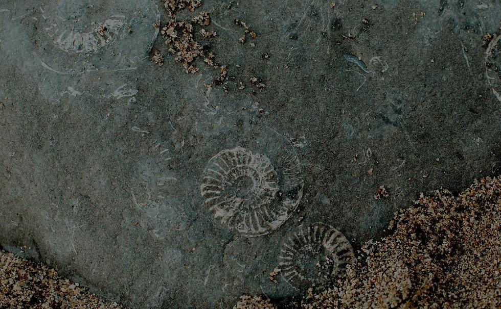 Fossil%2520beach_edited_edited.jpg
