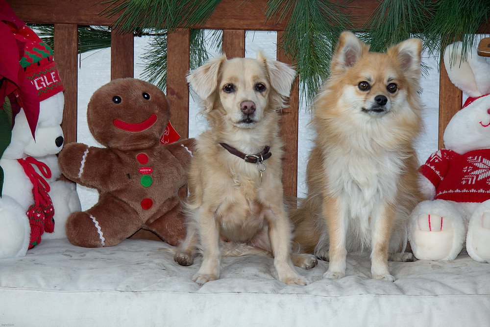 Trinket and Tucker Christmas.jpg