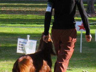 New AKC Rally Signs Class